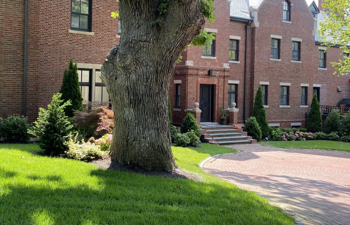A recently landscaped front yard with trees and shrubs.