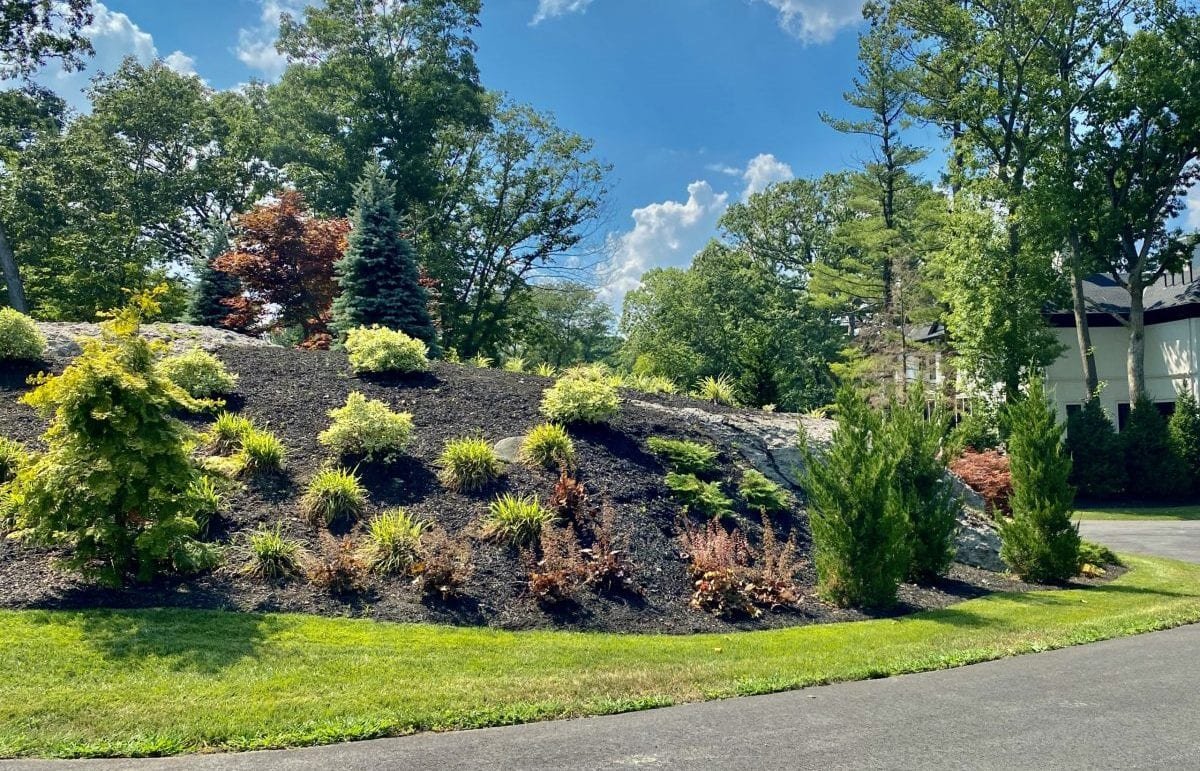 An after picture of the middle of a cul de sac that we recently landscape designed. It is adorned with green grass, trees and shrubs.