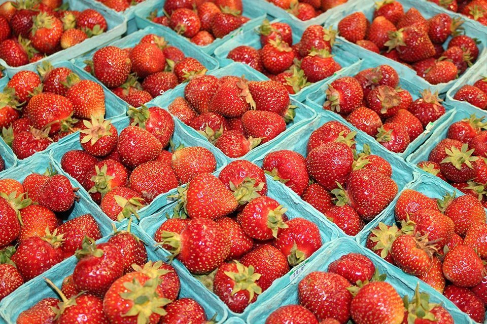 This picture displays bright red fresh native strawberries.